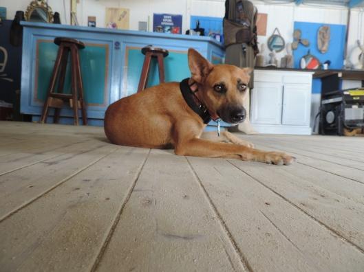 Guard pup
