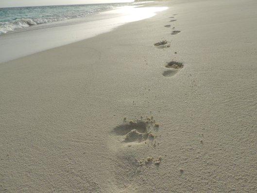 Leave footsteps