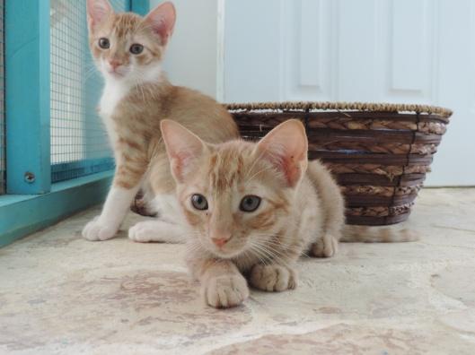Kittens awaiting their forever home